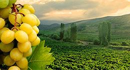 attr-winelands